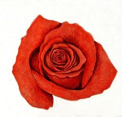 Rosa Vermelha — Paulo von Poser